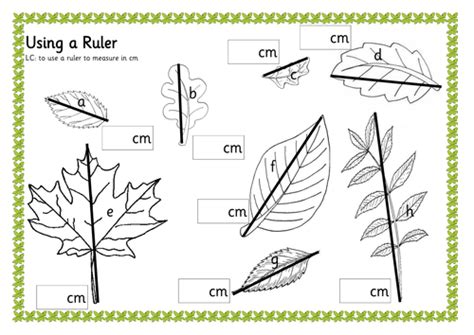 measuring leaves by renosparks teaching resources tes