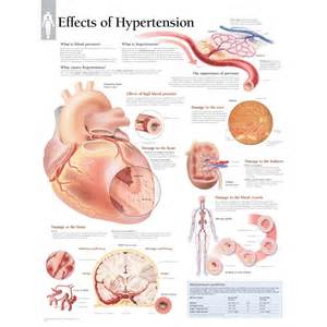 Effects On Blood Pressure Chart
