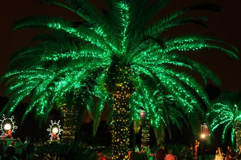 best christmas lights in florida 16 reasons christmas in florida is the absolute best