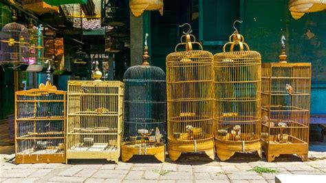 come fare una gabbia per uccelli 5 motivi per cui non puoi voler diy una gabbia per uccelli