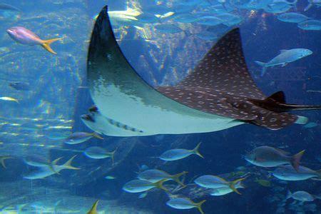 animales acuaticos animales acuaticos animales