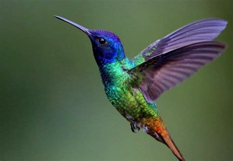 download colorful hummingbirds pictures on animal picture