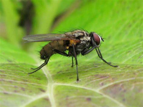 comment tuer les moucherons dans la cuisine comment chasser petites mouches