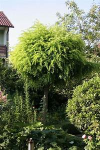 Kleine Bäume Für Garten : hausb ume f r kleine g rten garten b ume garten garten und haus b ume ~ A.2002-acura-tl-radio.info Haus und Dekorationen