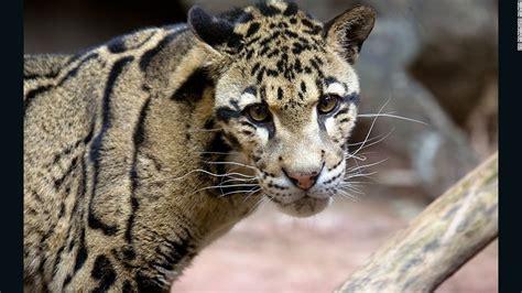 zoo frozen endangered species animals zoos save cnn breeding georgia current scientists build built kept breed