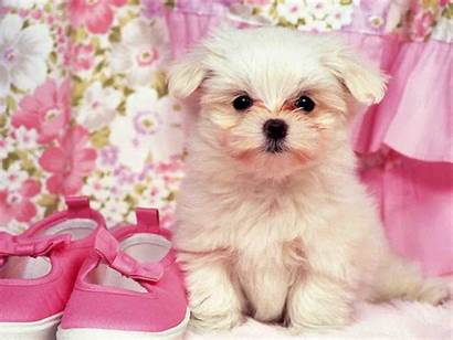 Puppy Dogs Girly Wallpapers Doge Amazing Animals