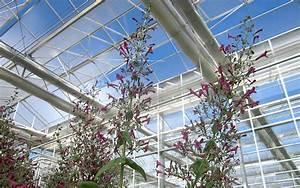Kräuterspirale Für Balkon : lepechinia pflanze lepechinia hastata kr uter f r ~ Michelbontemps.com Haus und Dekorationen
