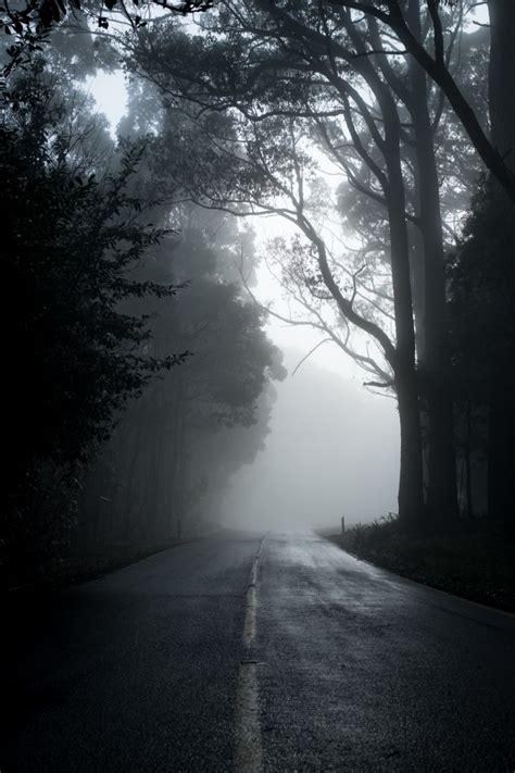 wallpaper dark forest road fog mood trees