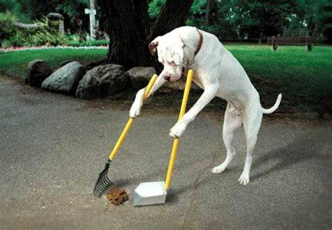 common health problems  dogs discount dog poop bags