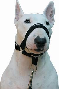 dogs my halter collar black x small