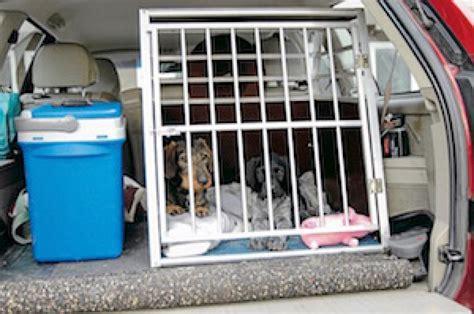 hund im auto transportieren hund im auto transportieren tiere frage und antwort