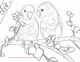 Coloring Bird Pages Colouring Budgie Lovebird Drawing Lovebirds Wild Printable Fun Cartoon sketch template