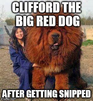 Clifford Memes - big red dog imgflip