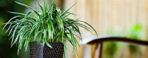 indoor plants cleaning  air sustainability