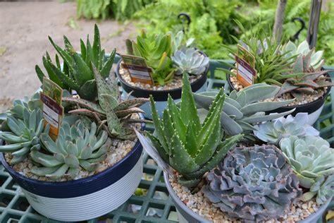 Cacti & Succulents - Vanderwees Home & Garden