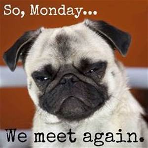 1000+ images about I hate monday on Pinterest | I hate ...