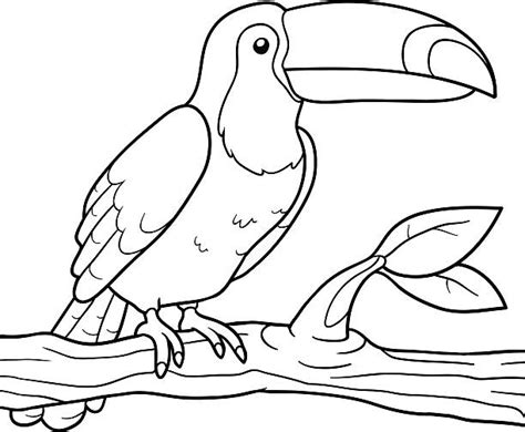 toucan clipart black and white toucan clipart pencil and in color toucan clipart