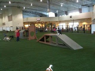 ideas  indoor dog park  pinterest