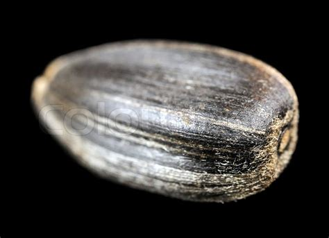 sunflower seed close   black background stock photo