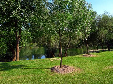 How To Protect Young Trees From Wind Damage  Lineage Tree