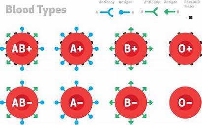 Blood Types Cells System Immune Transfusion Stealth