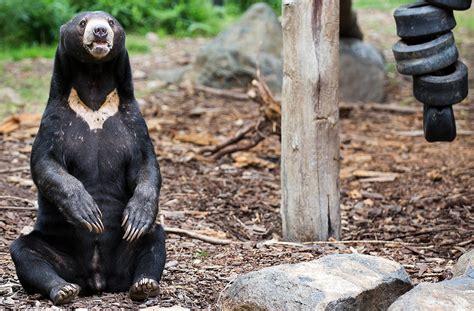 free-the-bears-image | National Zoo & Aquarium