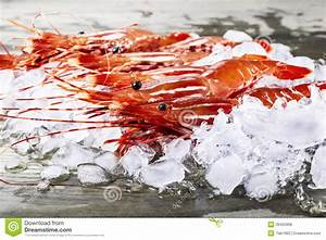 Live Shrimp on Dock stock photo. Image of macro, live ...