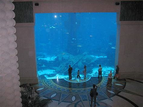 dubai hotel aquarium atlantis atlantis aquarium the palm