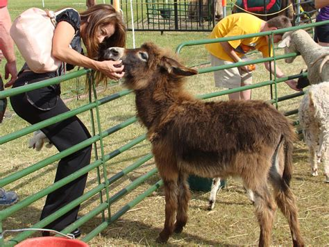 zoo animals petting farm parties birthday places 90s had pines whispering donkey mobile hands proved