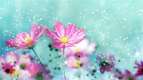 beautiful nature flower pics hd wallpaper