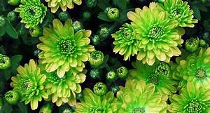 18 Types of Green Flowers - ProFlowers Blog