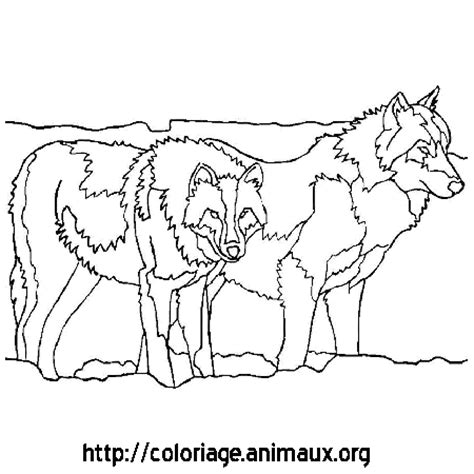 dessin loups coloriage dessin loups sur coloriage animaux org
