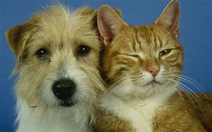 Dog Owners Are  U0026 39 Happier Than Cat Owners U0026 39  - Study