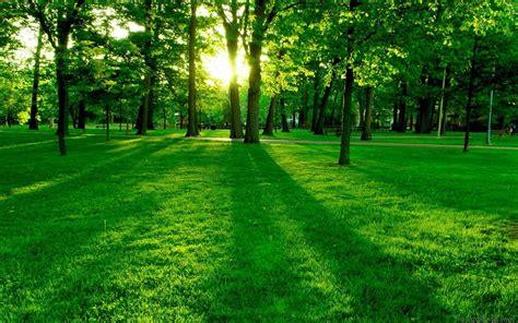 nature landscape green grass wallpapers hd desktop