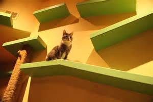 Cat Tunnel In-House Walls