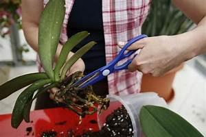 Orchideen Umtopfen Video : orchideen pflanzen orchideen richtig pflegen und orchideen ~ Watch28wear.com Haus und Dekorationen