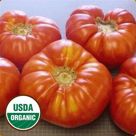 organic brandywine tomato seeds heirloom everwilde farms