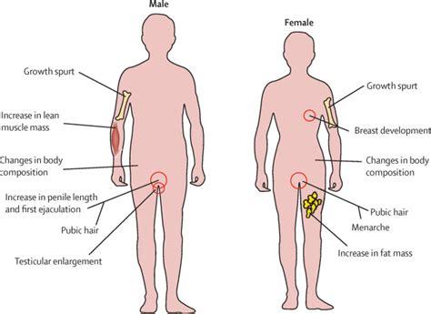 pubertal development  regulation  lancet diabetes