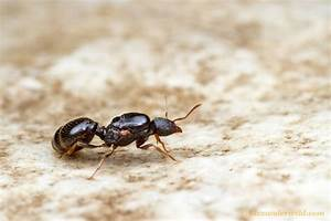 17 Best images about Ant. .. . .....A on Pinterest   Ants ...