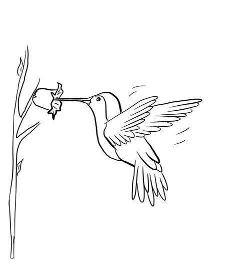 printable hummingbird coloring pages  kids
