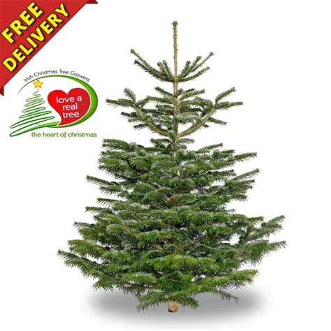 nordmann fir christmas tree home depot tree real tree new house designs