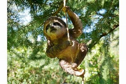 Sloth Climbing Garden Transparent Modernfl