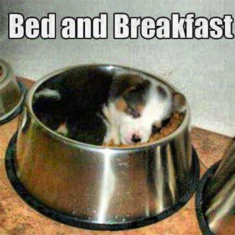 Breakfast In Bed Meme - niche raiders meme maker