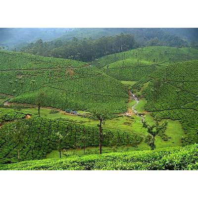 Valparai: where nature in green skirts.. a photo from