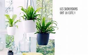 Plante Suspendue Intérieur : plante descendante interieur eq27 montrealeast ~ Teatrodelosmanantiales.com Idées de Décoration