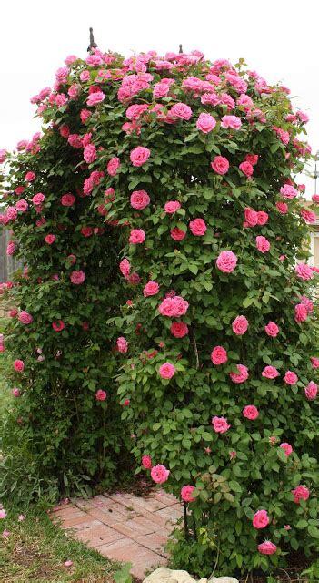 Love My Cottage Garden Arbor Bliss