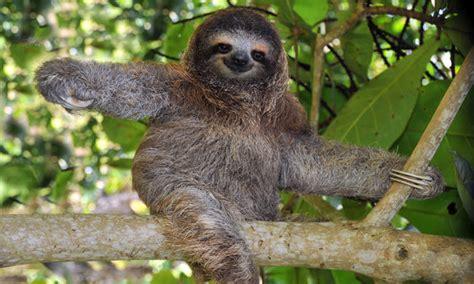 Panama Safari Vacation   Eco Adventure Package