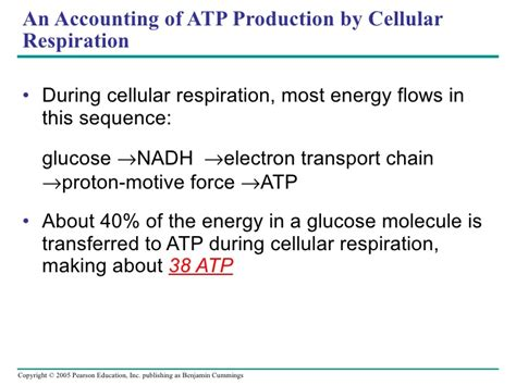 cellular respiration lecture