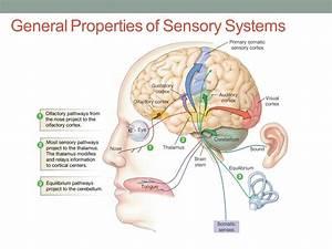 General Sensory Reception