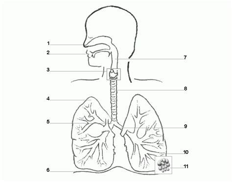 Respiratory System Parts Purposegames